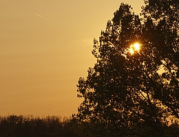 Der Sonnenuntergang am 12.09.20 war milchig-gelb ist - ein Zeichen für Staub in der Atmosphäre. (Bild: Tilo Arnhold, TROPOS)